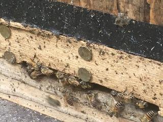 1025蜜蜂.jpg