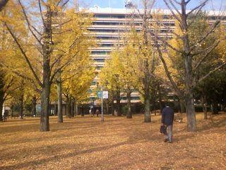 1128県庁の銀杏.jpg