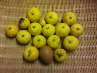 122柚子の実.jpg