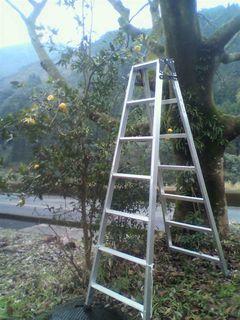 122柚子の木.jpg