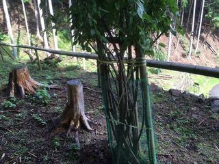 828植木の鹿除け.jpg