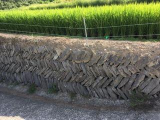 831豊島の石垣.jpg